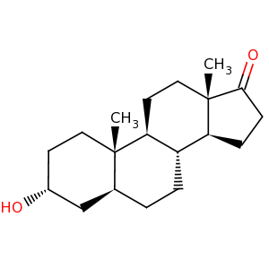 androsterone image